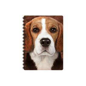 3D notesz - Beagle
