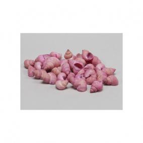 Csigaház 1kg rózsaszín
