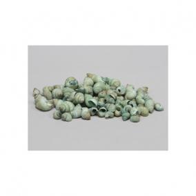 Csigaház 1kg zöld