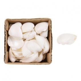 Kagyló dobozban 10x10x6cm fehér