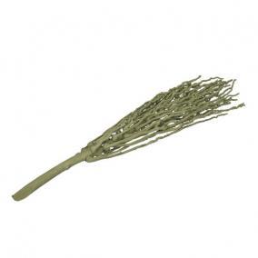 Pálma termés köteg zöld