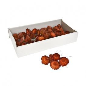 Protea betűzős narancs [50 db]