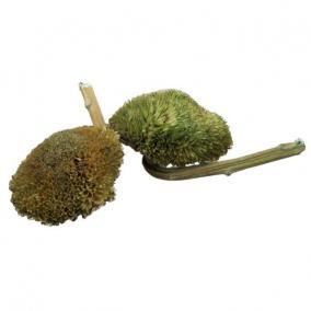 Szárított napraforgófej zöld [10 db]
