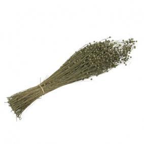 Len köteg 50-60 cm zöld