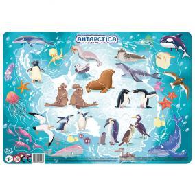 Dodo Keretes Puzzle 53 db - Antarktisz